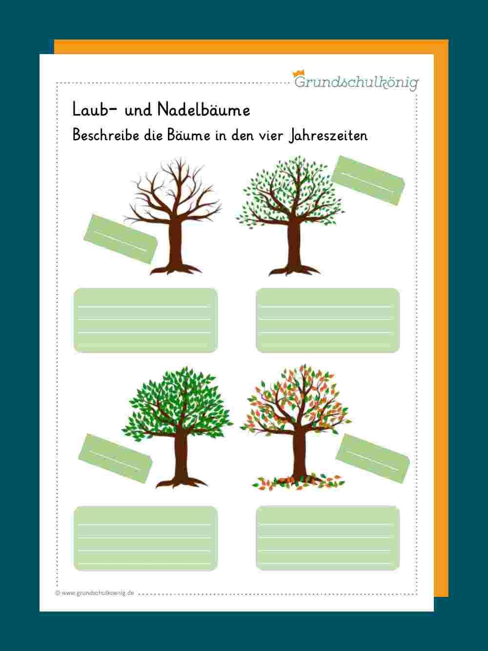 Waldbäume - Die wichtigsten Baumarten in Deutschland